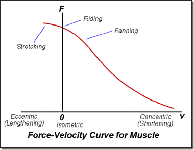 Force Velocity Cyrve